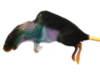 小动物谱成像
